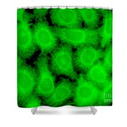 Human Glioma Cell Line Shower Curtain