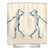 Human Muscular System - Dual View - Vintage Anatomy Poster Shower Curtain