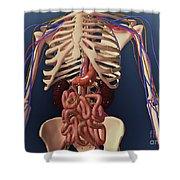 Human Skeleton Showing Kidney, Stomach Shower Curtain