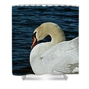 Humble Beauty Shower Curtain