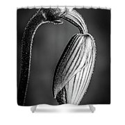 Humble Monochrome Shower Curtain