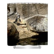 Humboldt Penguin 1 Shower Curtain