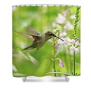 Hummer And Obedient Plant Shower Curtain