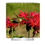 Hummer In The Bee Balm Shower Curtain