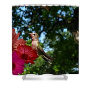 Hummers And Colored Daisies Shower Curtain