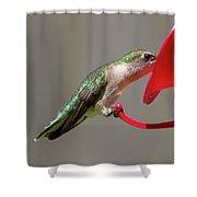 Humming Bird 10 Shower Curtain