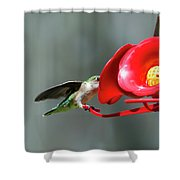 Humming Bird 6 Shower Curtain