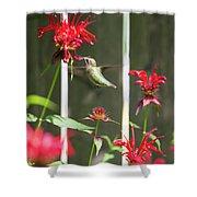 Humming Bird 7 Shower Curtain