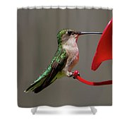 Humming Bird 8 Shower Curtain