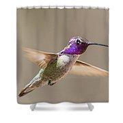 Humming Bird Freeze Frame Shower Curtain