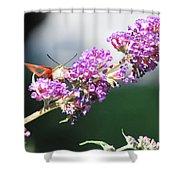 Humming Bird Moth Shower Curtain