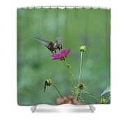 Humming Bird On A Cosmo Shower Curtain