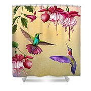 Humming Birds And Fuchsia-jp2784 Shower Curtain