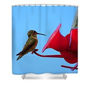 Humming In On The New Feed Sack Shower Curtain