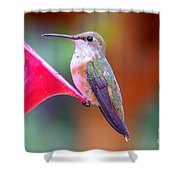 Hummingbird - 18 Shower Curtain