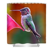 Hummingbird - 28 Shower Curtain
