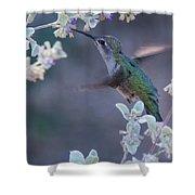 Hummingbird 0091 Shower Curtain