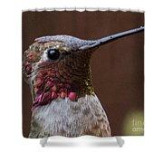 Hummingbird 16 Shower Curtain