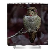 Hummingbird 17 Shower Curtain