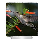 Hummingbird #2 Shower Curtain