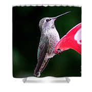 Hummingbird 23 Shower Curtain