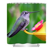 Hummingbird 32 Shower Curtain
