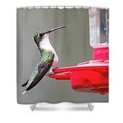 Hummingbird 33 Shower Curtain