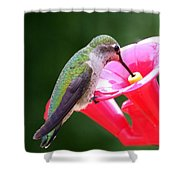 Hummingbird 33 Shower Curtain
