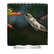 Hummingbird #4 Shower Curtain