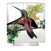Hummingbird 5 Shower Curtain