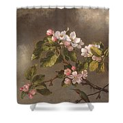 Hummingbird And Apple Blossoms Shower Curtain