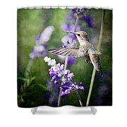 Hummingbird And Purple Lupine  Shower Curtain