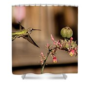 Hummingbird And Red Yucca Shower Curtain