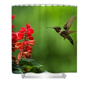 Hummingbird And Scarlet Sage Shower Curtain