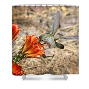 Hummingbird And The Hedgehog  Shower Curtain