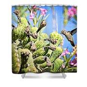 Hummingbird And The Saguaro  Shower Curtain
