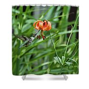 Hummingbird And Tiger Lilly Shower Curtain