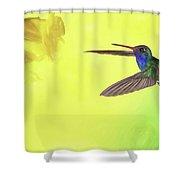 Hummingbird Approach Shower Curtain