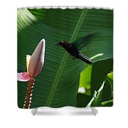 Hummingbird At Banana Flower Shower Curtain