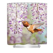 Hummingbird At Wisteria Shower Curtain