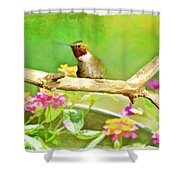 Hummingbird Attitude - Digital Paint 2 Shower Curtain