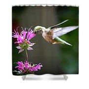 Hummingbird Beauty Shower Curtain