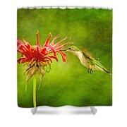 Hummingbird Bee Balm And Textures Shower Curtain