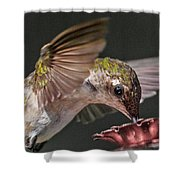 Hummingbird. Shower Curtain