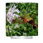 Hummingbird Clear-wing Moth At Monarda Shower Curtain