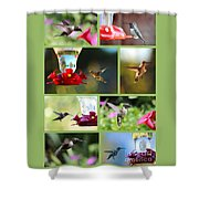 Hummingbird Collage 2 Shower Curtain