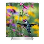 Hummingbird Dance Shower Curtain by Dana Moyer