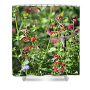 Hummingbird Drinking From Red Trumpet Vine Shower Curtain