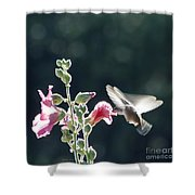 Hummingbird Drinking Pink Hollyhock Photography Shower Curtain