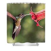 Hummingbird Enjoying Beautiful Flower Shower Curtain